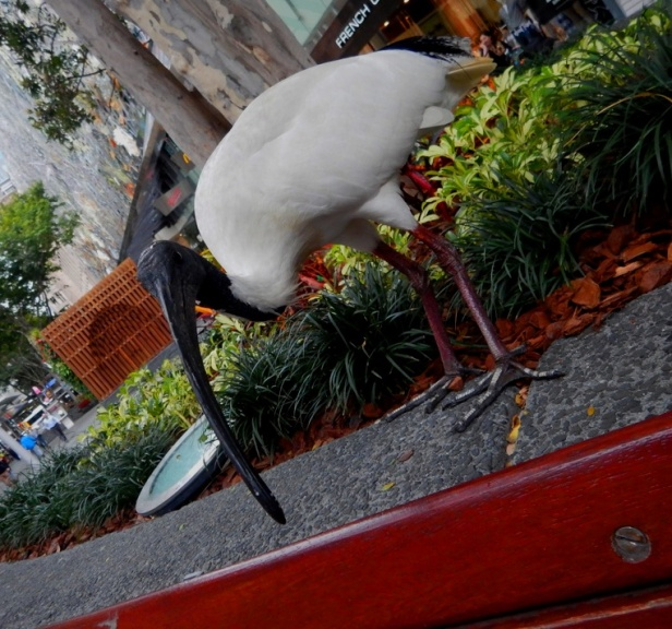 Australie Brisbane oiseau